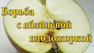 видео Яблоневая плодожорка