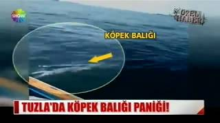 Tuzla'da balık tutmaya çıkan kişi köpek balığı yakaladı.