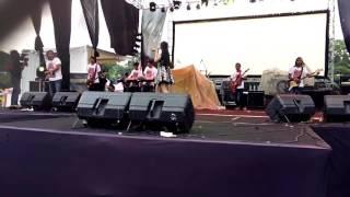 Fibri viola lungset