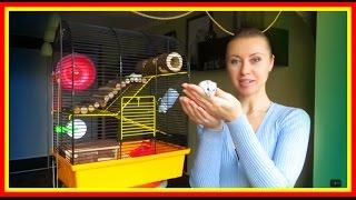 видео Как правильно ухаживать за маленьким домашним хомяком?