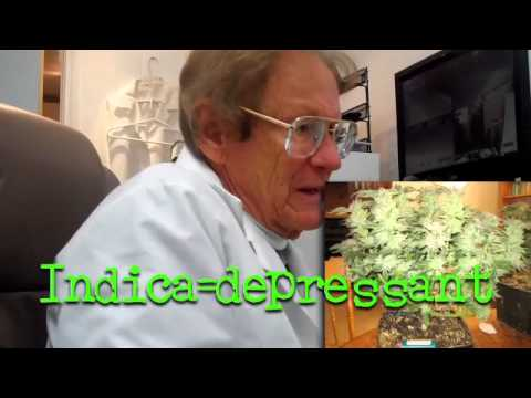 How to get a medical marijuana doctor's recommendation on Hashbar.tv