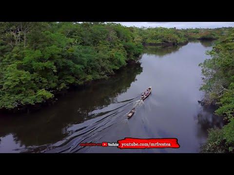 PENGUASA AMAZON! 10 Sosok Hewan Penghuni Hutan Sungai Amazon