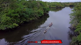 PENGUASA AMAZON! 10 Sosok Hewan Penghuni Hutan Sungai Amazon