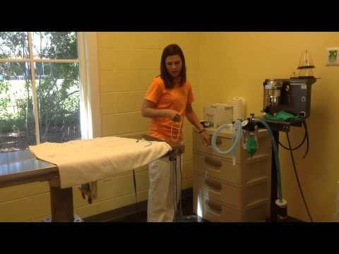 missy willis  cleaning and prepping surgery room part 1