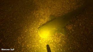 СОМ Подводная охота река Днепр spearfishing