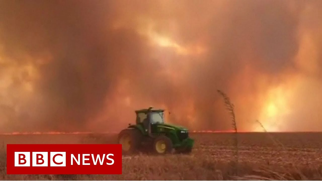 BBC News:Spike in wildfires in Brazil's Amazon rainforest - BBC News