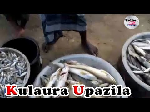 Kulaura Upazila | Big Fish Mela