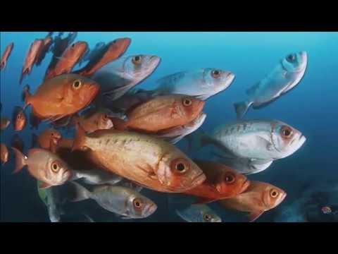 Fish's Memories