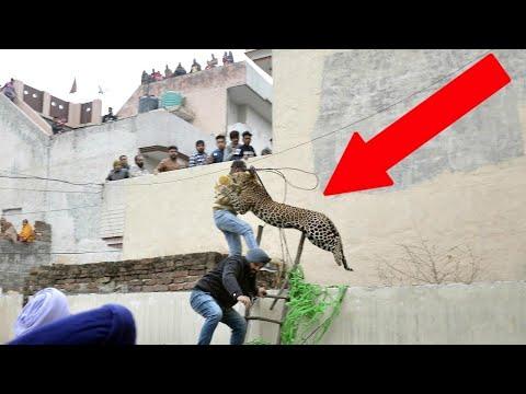 When Leopards Attack