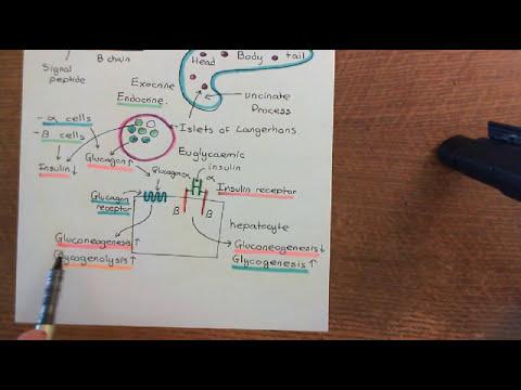 Diabetes Mellitus and Antidiabetic Drugs Part 1