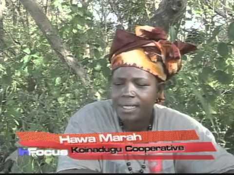 Sierra Leone Women Farmers