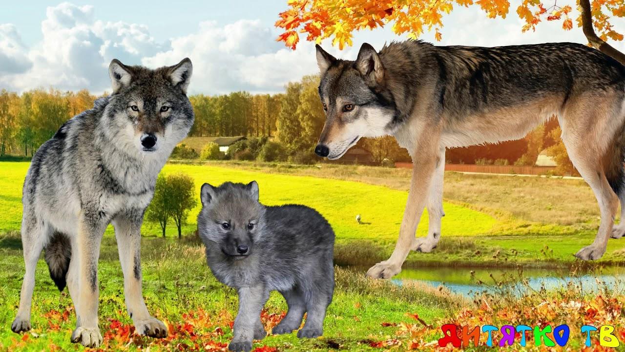 Дикие Животные и их детеныши Учим животных Развивающие ...