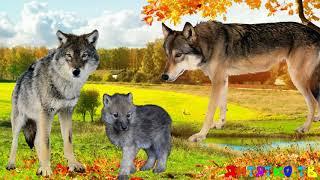 Дикие животные и их дети. Животные и их детеныши. Семья животных. Животные и их детки.