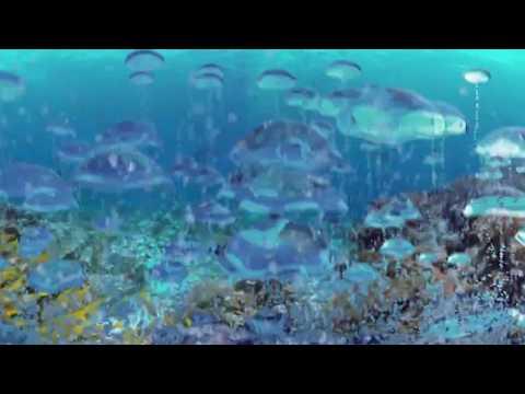 360° on deep-sea fishing ban
