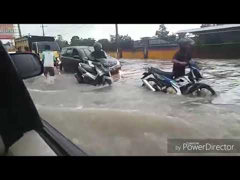 Ular Muncul Saat Banjir Di Kalimantan