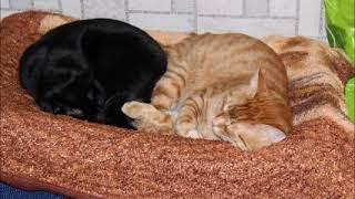 Мои любимые котики. сентиментал клип.  Боня Боничка89