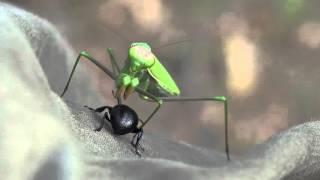 Praying mantis in Valley of the moon, Sardinia Italy 11-15-15