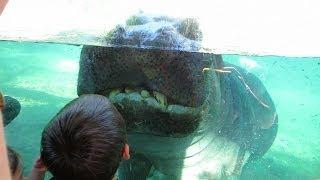 A Smile More Hippo!