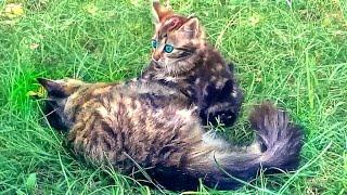 Judo kitten