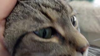 Kitten Close Up 2017-07-31 thumbnail