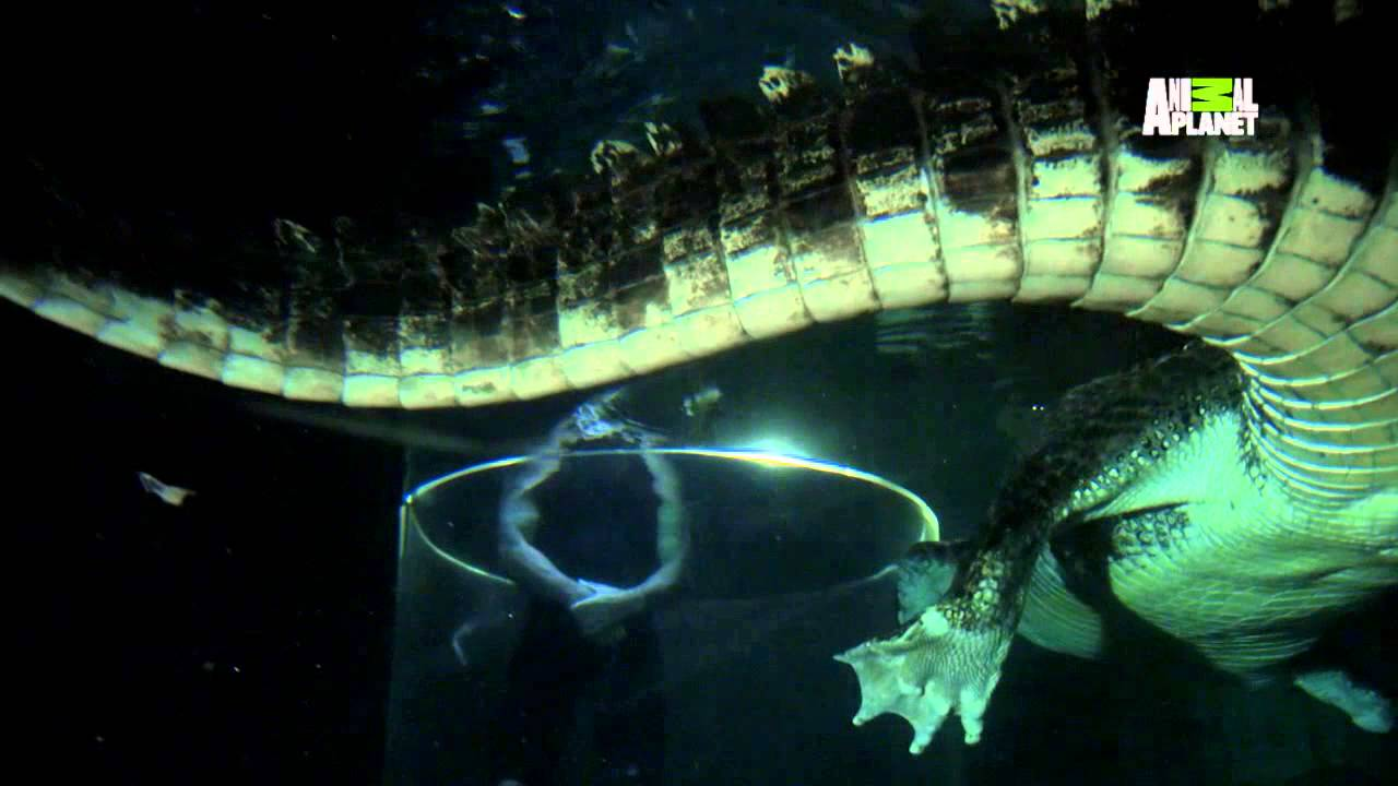 River monsters prehistoric croc youtube for What saltwater fish are in season now