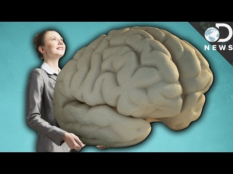 Why Do Humans Have Such Big Brains?