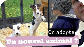 ON ADOPTE UN NOUVEL ANIMAL ??? - VLOG FAMILLE