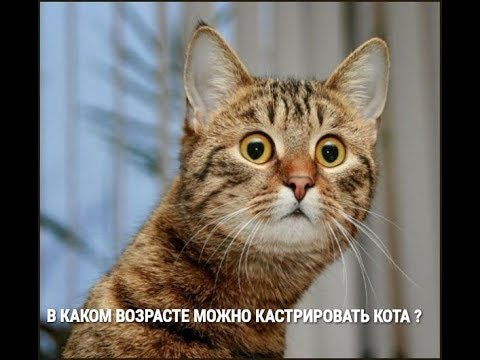 Вопрос: Кот понимает что его кастрировали и может потом отомстить?