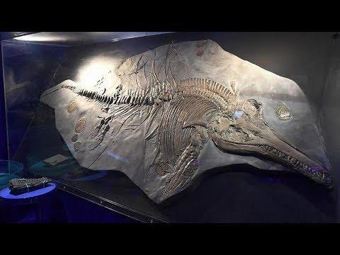 Embryo found: within fossilized ichthyosaur of 200 million years.