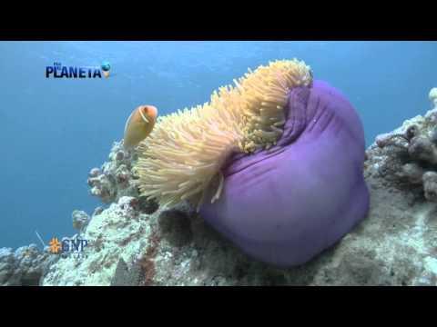 Por el planeta | Palau, el último paraíso | Parte 3