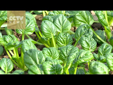 Organic farming set for boom in China? — 20150612