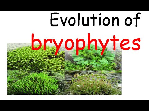 Plant evolution | bryophytes evolution