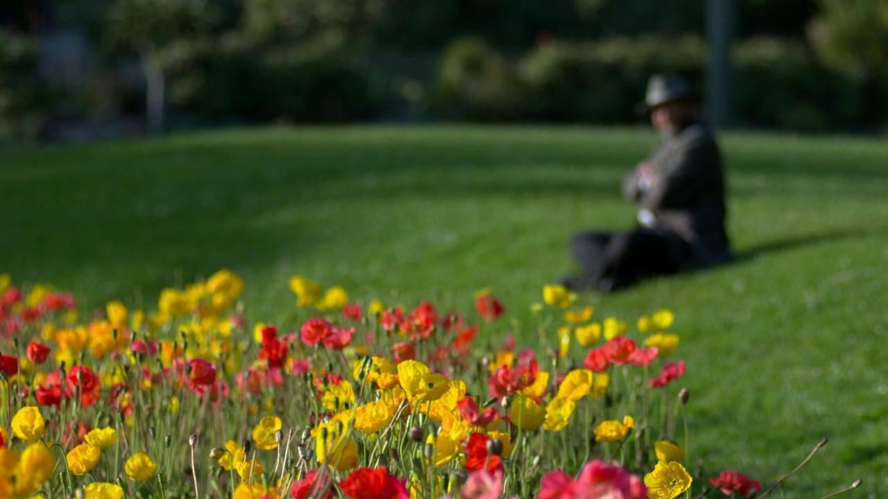 Beautiful flowers gif youtube beautiful flowers gif izmirmasajfo