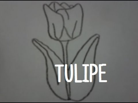 how to draw a tulipe