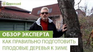 Как правильно подготовить плодовые деревья  к зиме