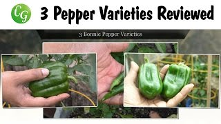 Pepper Growing Tutorial - 3 Pepper Varieties Reviewed