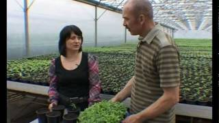 видео Сад и огород:рассада советы
