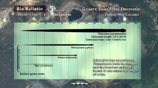Science Bulletins: Gigantic Snake Fossil Discovered