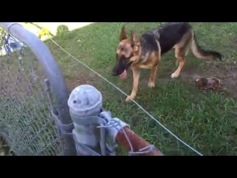 DIY Electric fence install and setup for a German Shepherd