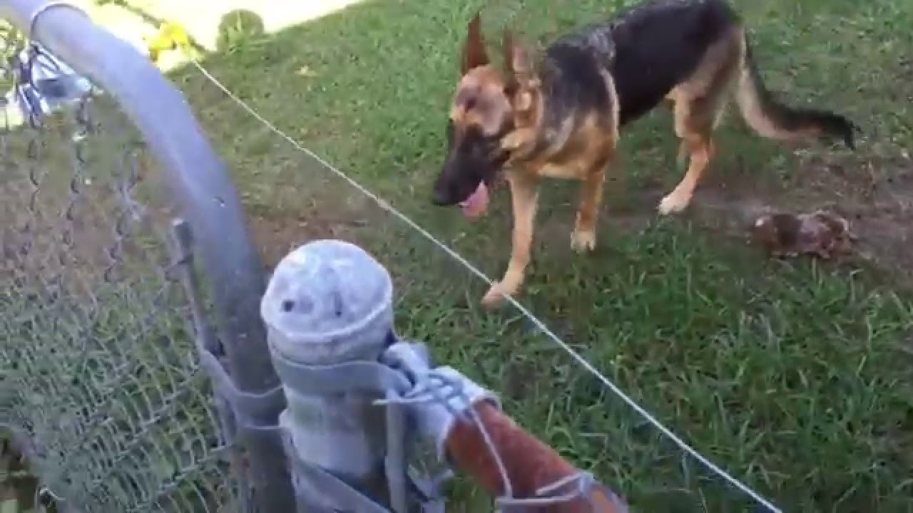 Diy Electric Fence Install And Setup For A German Shepherd Youtube
