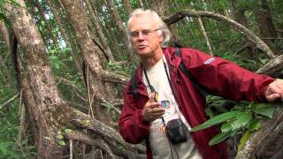 James Cook University - Mangrove Watch