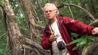 James Cook University - Mangrove Watch