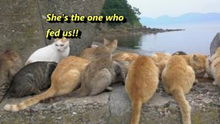 Visiting Cat Island Aoshima 青島! Cats EVERYWHERE!!!! Japan Trip S01E05