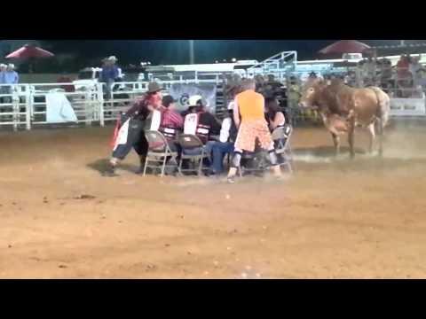 Покер с быками! Прикольное видео