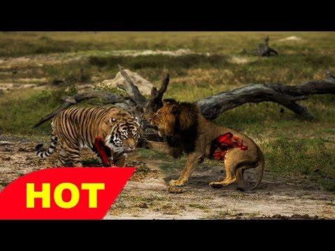 Zoom HD Spy Cam AFRICA INTENSE Wild Animal Documentary