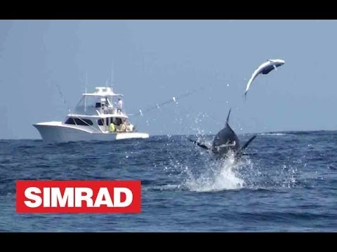 AMAZING BLUE MARLIN FOOTAGE - A MUST SEE !!!
