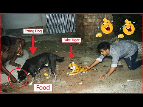 Fake Tiger Prank Dog and Monkey!Fake Tiger Prank very funny dog!do not try stop laugh Funnies!!