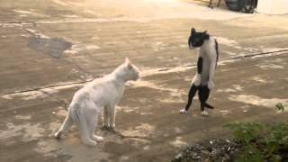 فيديو قطط مضحك جدا - قطط تسقط مرارا وتكرارا