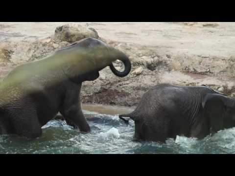Baby elephants having fun playing in the water
