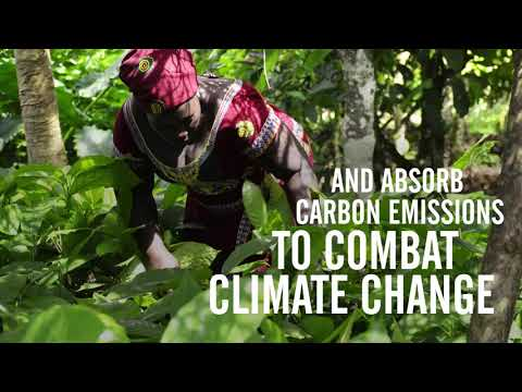 Cocoa Life approach to address climate change